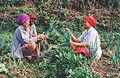 Peasant family in Indonesia.jpg
