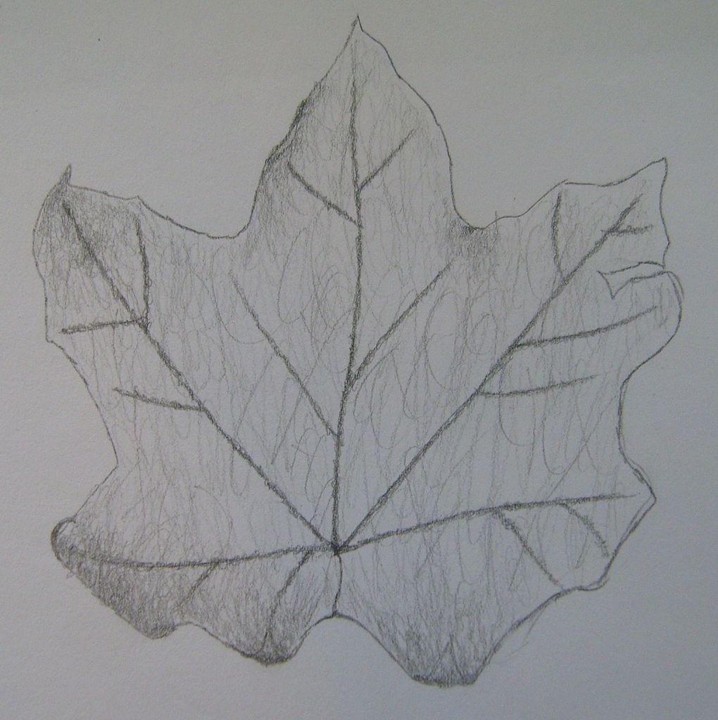 Filepencil drawing study leaf 2 jpg