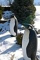 Penguins! (2270169398).jpg