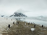 Penguins & mountains (24458021300).jpg