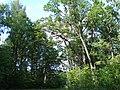 Piļoru ozolu audze, Andzeļu pagasts, Dagdas novads, Latvia - panoramio.jpg