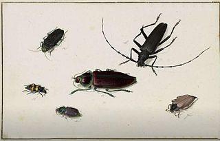 Six Beetles