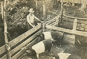 Photo of farm pig pen taken in 1934 by Alison ...
