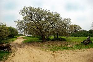 HaSharon Park - HaSharon Park