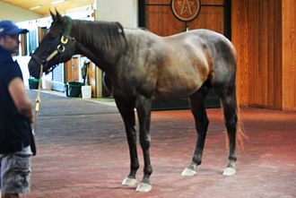 WinStar Farm - Image: Pioneerof the Nile at Winstar Farms