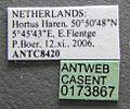 Plagiolepis alluaudi casent0173867 label 1.jpg