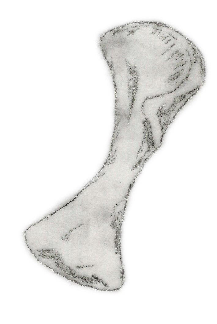 Plateosauravus cullingworthi humerus