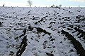 Ploughed Field with Snow and Boot Tracks - geograph.org.uk - 1161275.jpg