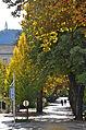 Poertschach Elisabethstrasse im Herbstkleid 11102013 239.jpg