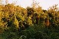 Poljanska buža - panoramio.jpg