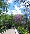 Pollinator Garden in April (17588708526).jpg