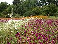 Poltava Botanical Garden (164).jpg