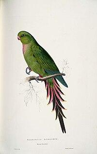 Polytelis alexandrae -Palæornis rosaceus Roseate Parrakeet -by Edward Lear 1812-1888