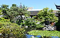Pond - Dr. Sun Yat-Sen Classical Chinese Garden - Vancouver, Canada - DSC09835.JPG
