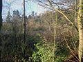 Pond at Downton - geograph.org.uk - 1309173.jpg