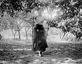 Portrait, woman, swing, garden, summer Fortepan 3756.jpg