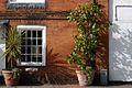 Potted Pants Outside Cottage Chobham Village Surrey UK.jpg