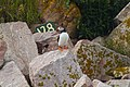 Puffin near a numbered burough (4857007346).jpg