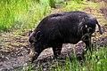 Pumba (18563139).jpeg