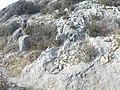 Qrendi, Malta - panoramio (119).jpg