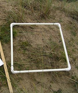 Quadrat A rectangular frame used to demarcate a part of the substrate for detailed analysis
