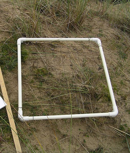File:Quadrat sample.JPG