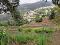 Quinta do Monte, Funchal, Madeira - IMG 6418.jpg