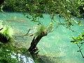 Río Eume ao seu paso polas fragas.jpg