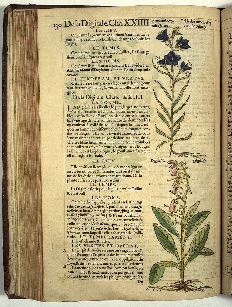 File r dodoens histoire des plantes 1557 de la for Histoire des jardins wikipedia
