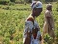 RURAL WOMEN FEEDING SENEGAL.jpg