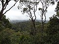 Ranomafana National Park 2013 7.jpg