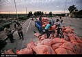 Relief to Flood-affected ranchers by the Barakat Foundation & Basij07.jpg