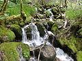 Reserva Natural Integral de Muniellos (Asturias, España) 17.JPG
