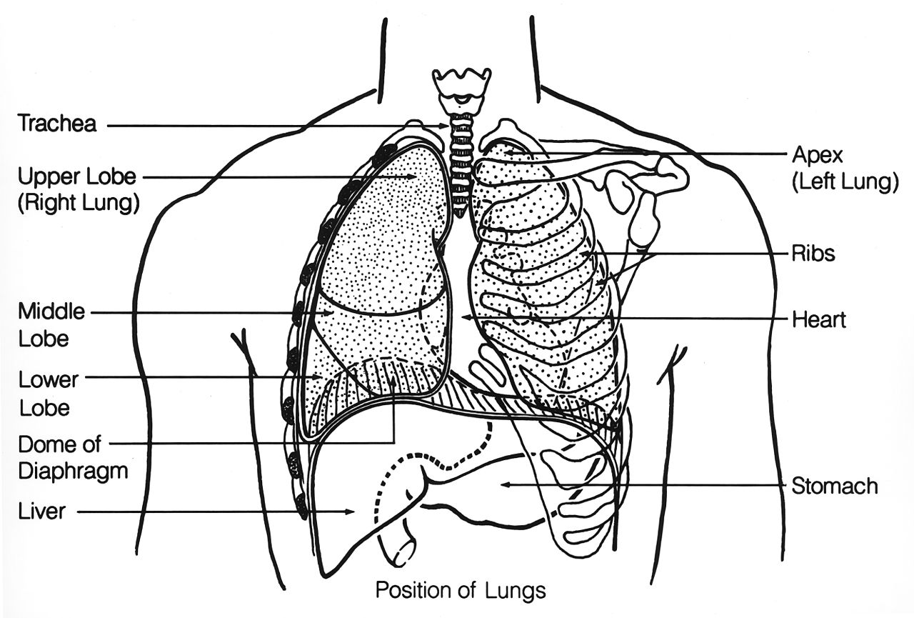 an overview of the respiratory system in humans 2010-5-18 the respiratory system and gas exchange  a respiratory surface is covered with thin,  humans exchange only 1% of.
