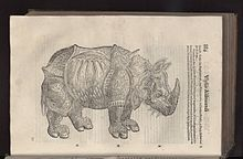 Illustrazione di un rinoceronte nel Quadrupedum omnium bisulcorum historia di Ulisse Aldrovandi. L'illustrazione è stata ispirata da una xilografia del Dürer.