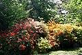 Rhododendrons Mariemont JPG.jpg