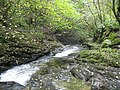 River Lyd in Lydford Gorge - geograph.org.uk - 1019946.jpg