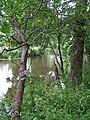 River bank, Cranny, Omagh - geograph.org.uk - 1376750.jpg
