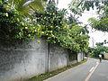 Rizal,Lagunajf3491 26.JPG