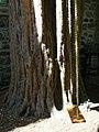 Robert Louis Stevenson's Tree detail - geograph.org.uk - 1407536.jpg