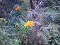 Rock and flowers at hanging rock in Vic Australia.jpg