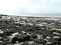 Rocky foreshore at Redcliff Bay 2 - geograph.org.uk - 1276595.jpg