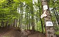 Romania - trail 6.jpg
