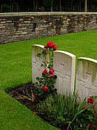 Roses growing in front of graves, Menin Road South Military cemetery 977687052