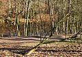 Rottmannsteich bb02.jpg