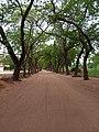 Rue à l'intérieur du campus d'Abomey-Calavi.jpg
