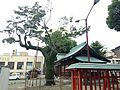 Sacred tree and shaden of Wakamiya Shrine in Chuo, Fukuoka.JPG