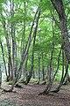 Sagura, Showa, Onuma District, Fukushima Prefecture 968-0215, Japan - panoramio (1).jpg
