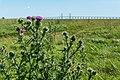 Saltholm - panoramio (28).jpg