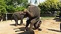 "Samui 2013 May ""Island Safari"" - panoramio (6).jpg"